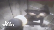 Site 'TMZ' divulgou vídeo com agressão de Ray Rice, running back dos Baltimores Ravens, a esposa