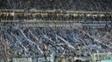 Grêmio montou time campeão gastando muito pouco