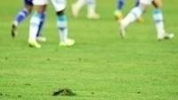 Allianz Parque terá gramado retirado