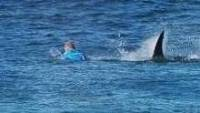 Mick Fanning foi atacado por tubarão na final da etapa de J-Bay, na África do Sul