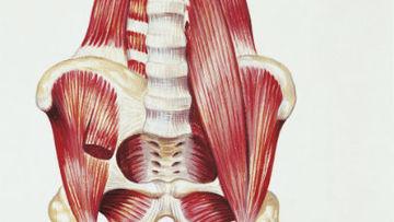 'Músculo da alma': o mais estabilizador do corpo humano e fundamental para correr em equilíbrio