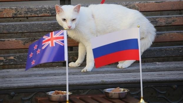 Aquiles, ou Akhill, é o gato 'oráculo' da Copa das Confederações