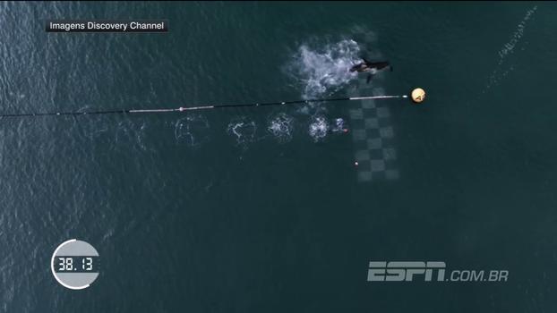 Michael Phelps aposta corrida com tubarão branco em alto mar; veja quem venceu