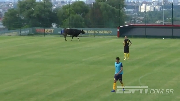 Em jogo-treino, vaca e cachorro invadem campo e paralisam partida
