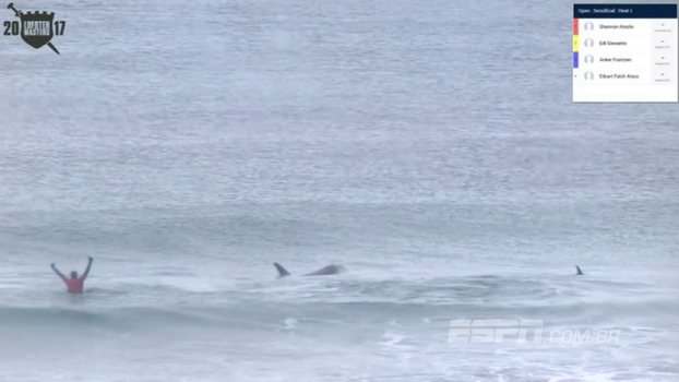 Orcas 'invadem' campeonato de surfe na Noruega