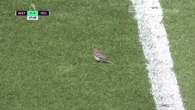 Passarinho invade gramado e precisa ser resgatado por jogador do Watford