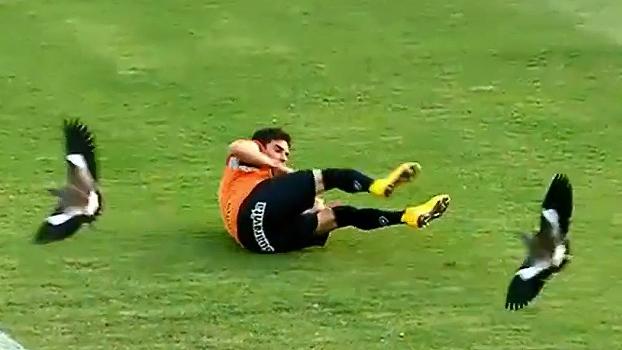 f4fbb1b624 Quero-queros dão show à parte em treino do Botafogo  assista