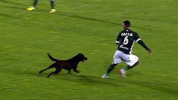 Cachorro invade gramado na Série B e persegue lateral ex-Palmeiras