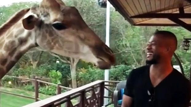 Em vídeo hilário, Evra aparece alimentando girafa e diz: 'Ela adora esse jogo!'