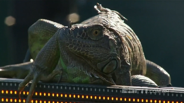 Iguana marca presença em torneio de tênis nos EUA, ganha selfie e dá 'baile' em todo mundo