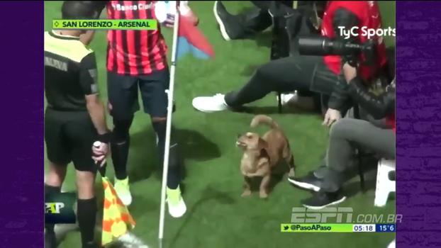Cachorro invade partida na Argentina, sai driblando e ainda dá entrevista