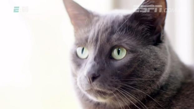 A vida dele é pesquisar os jogadores que têm gatos: conheça o dono do 'NBA Catwatch'