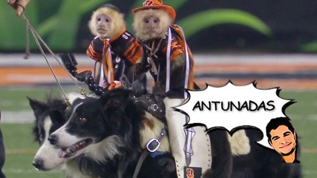 'Macacos caubóis', prefeito de Nova York paga aposta, e resumo da NFL no Antunadas