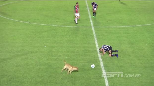 Cachorro invade campo durante partida da 3ª divisão argentina e comete 'falta violenta' em jogador