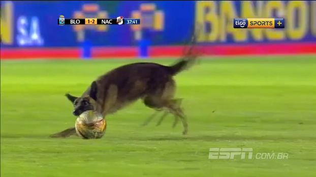 Cachorrão entra em campo durante jogo na Bolívia, se empolga com a bola e dá trabalho para ser retirado
