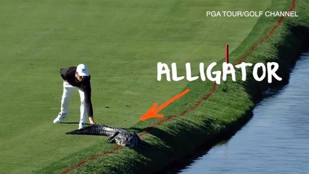 Golfista espanta jacaré durante torneio nos EUA; veja