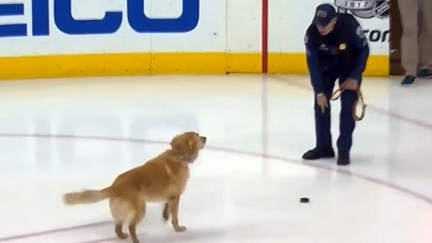 Escorregando para lá e para cá, cachorro se diverte em arena de hóquei no gelo