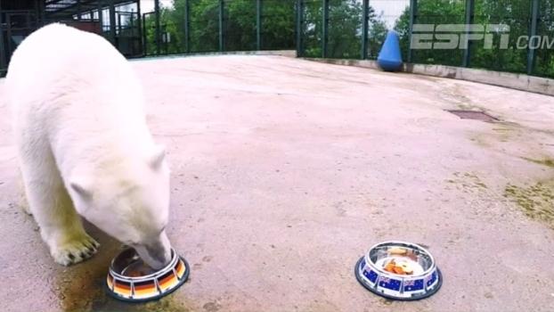 Conheça Nika, o urso polar que faz previsões dos vencedores na Copa das Confederações