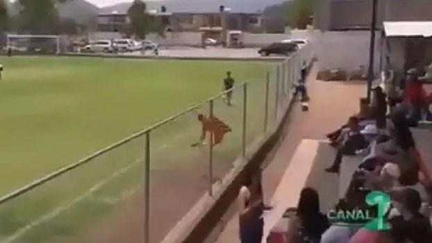 No México, atacante deixa o dele e comemora se arremessando em grade de arquibancada